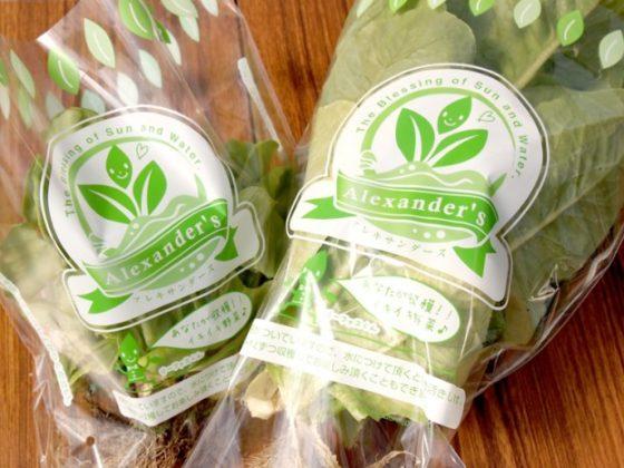 野菜の包装フィルムデザイン
