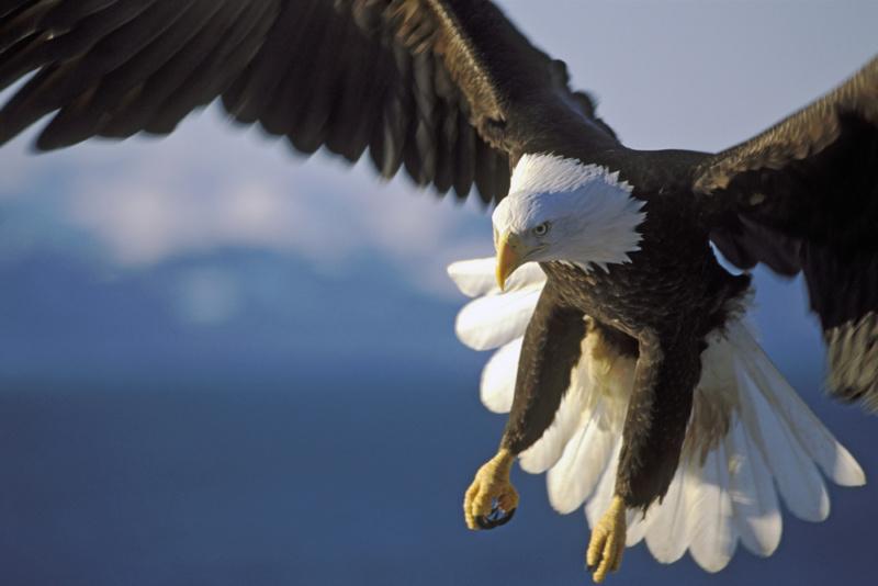 鷹のデザインが与えるイメージ