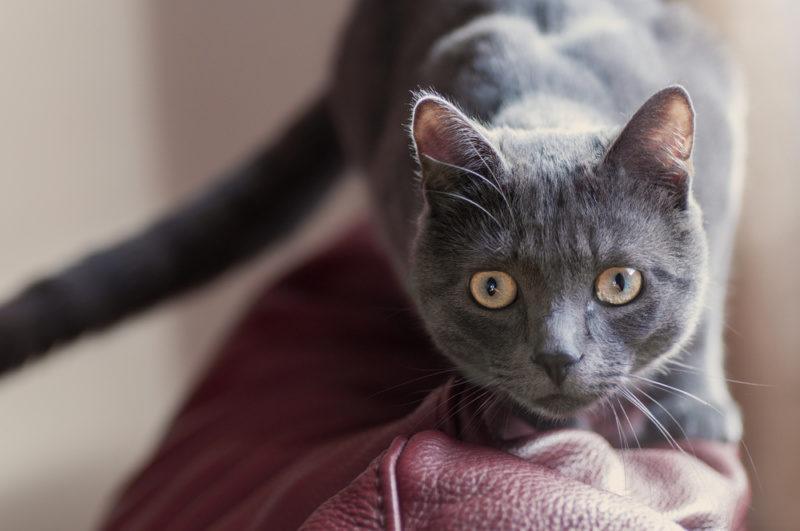 猫のデザインが与えるイメージ