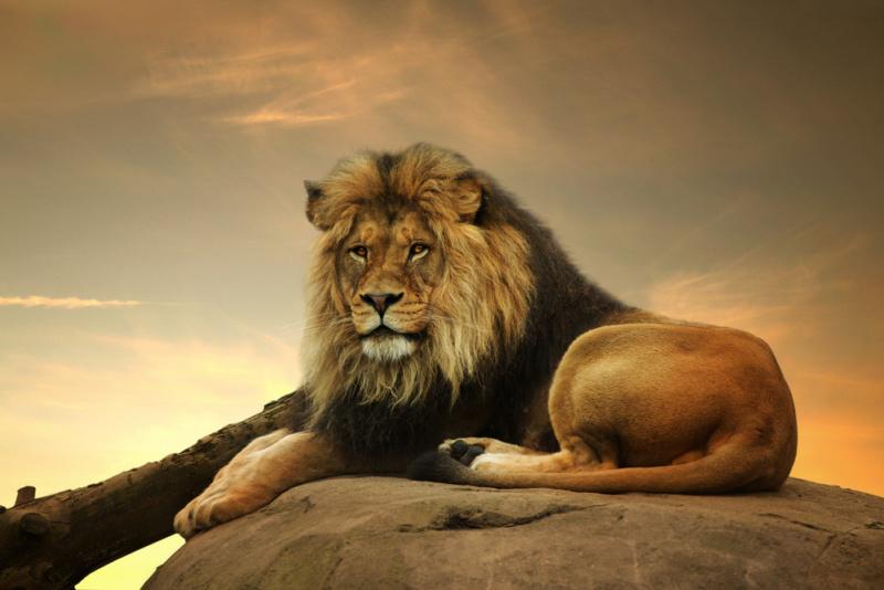 ライオンのデザインが与えるイメージ