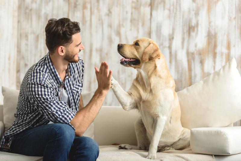 犬のデザインが与えるイメージ