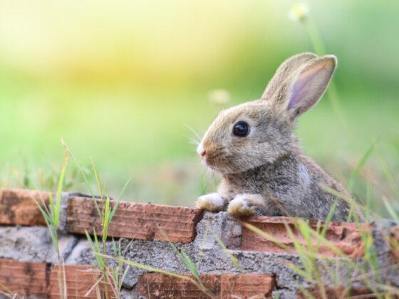 ウサギがモチーフのロゴデザイン作例