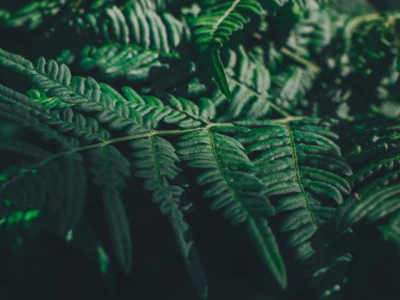 自然素材の植物イラストが美しい石鹸パッケージデザインについて