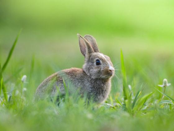 ウサギをモチーフにしたロゴ作成例について