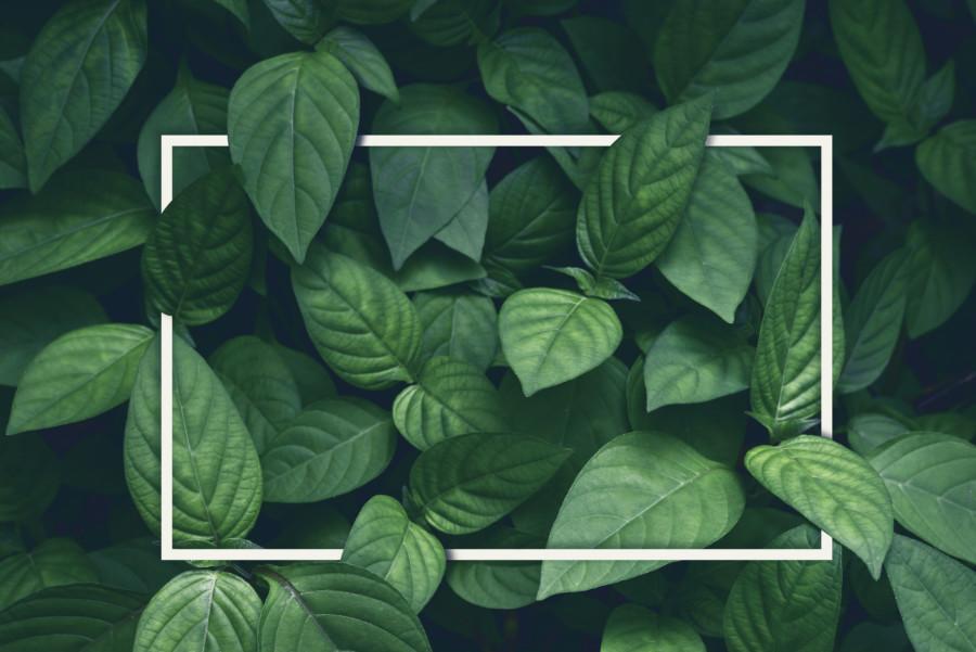 グリーン系のポスターについて