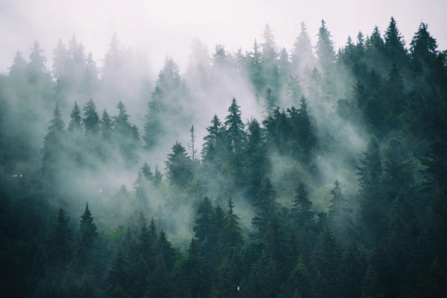 森をモチーフにしたポスターについて