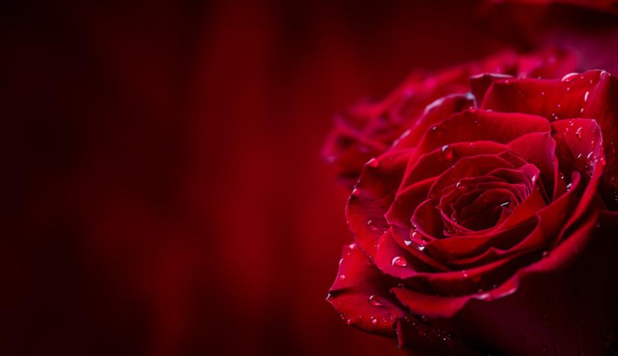 バラをモチーフにしたロゴについて