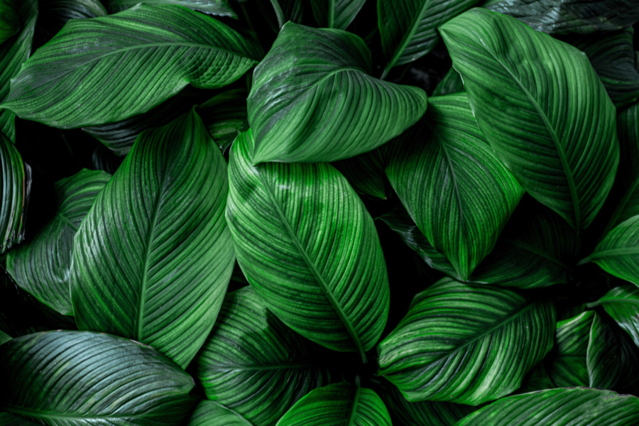 緑を基調としたパンフレットデザイン作成例について