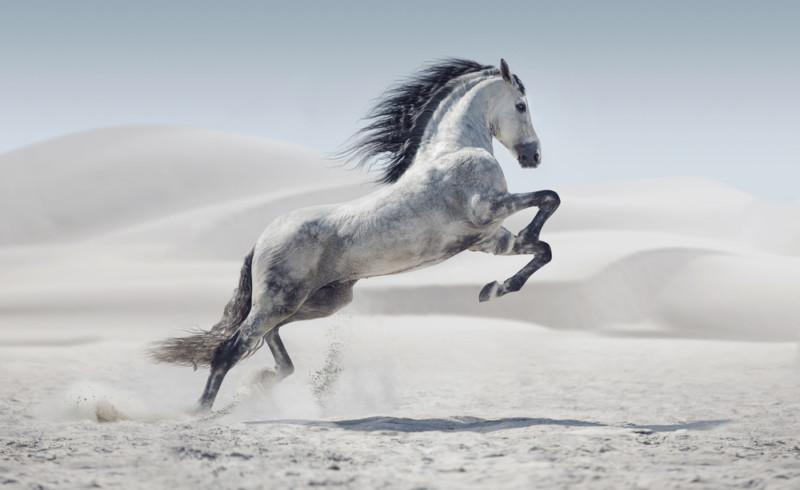 馬の魅力が詰まったロゴ
