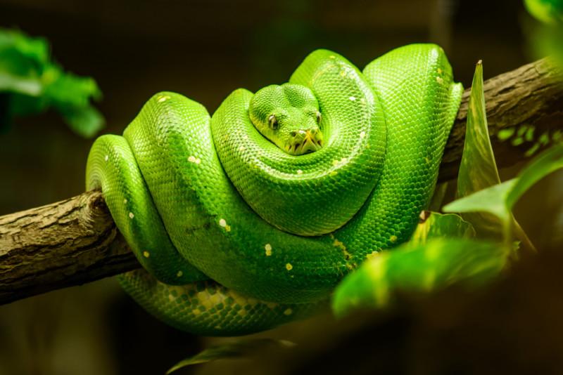 ヘビを使ったロゴについて