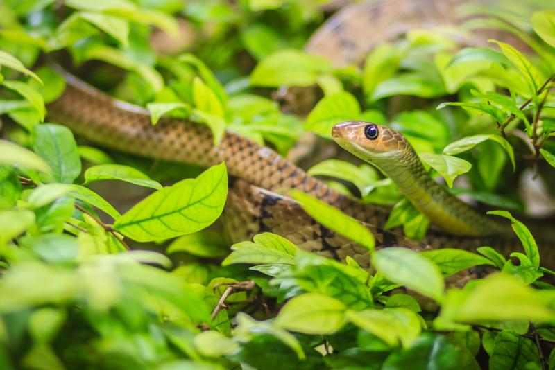 可愛い蛇のロゴ
