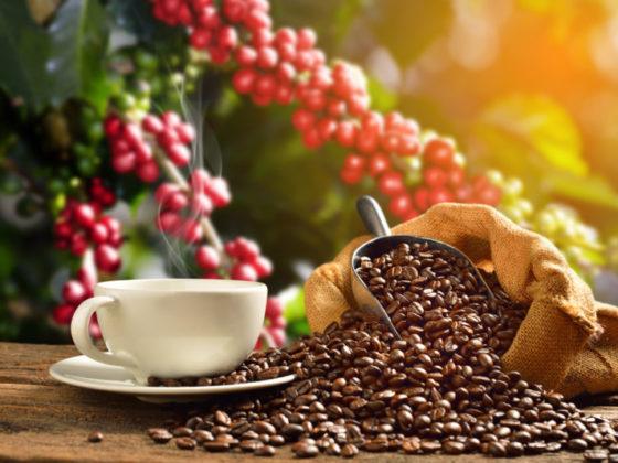 コーヒーの木をモチーフにしたカフェロゴ