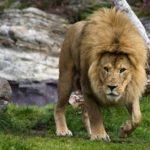 動物が登場する迫力のフライヤー・ポスターデザイン