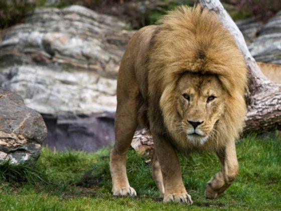 動物が登場する迫力のフライヤー・ポスターについて