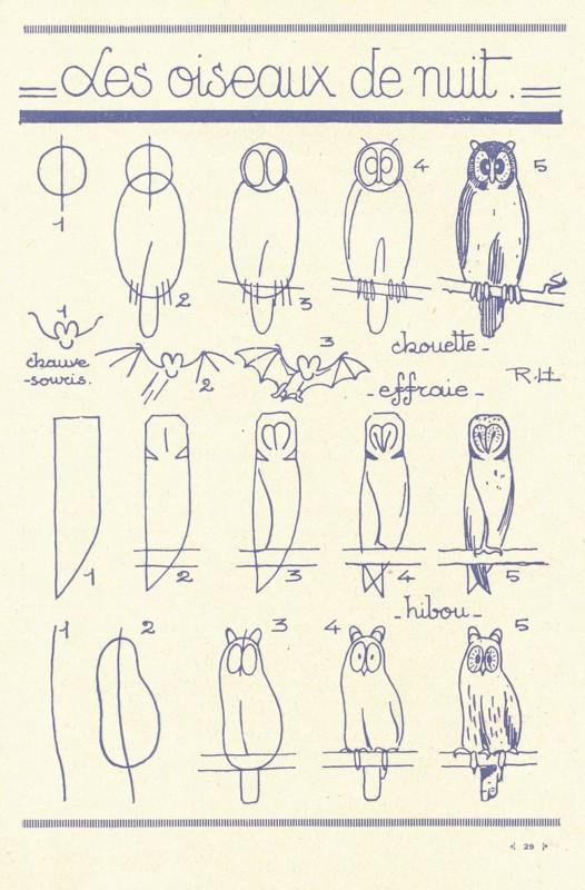 フクロウの描き方