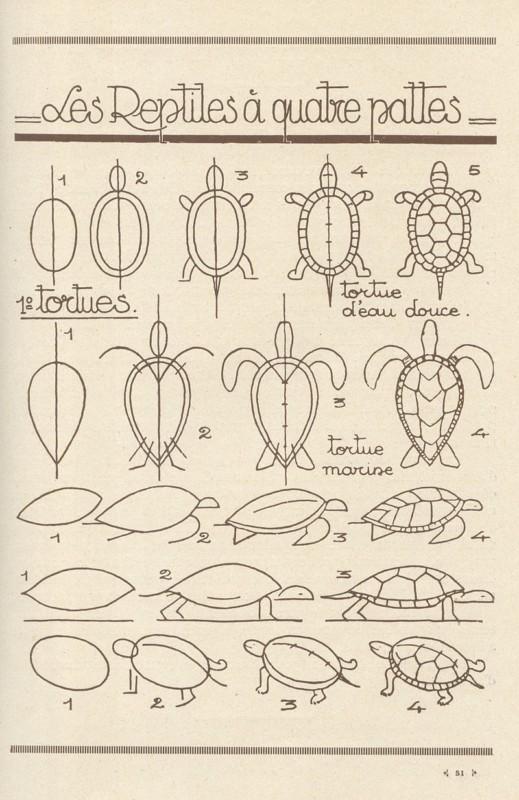 亀の描き方
