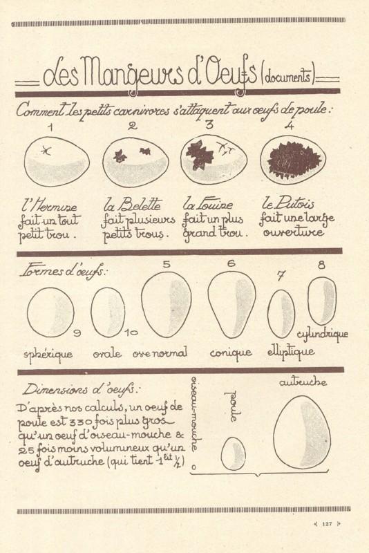 卵の書き分け