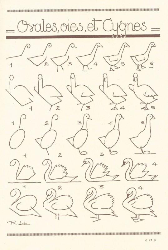 白鳥の描き方